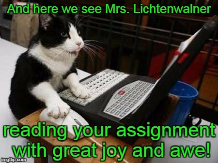 And here we see Mrs. Lichtenwalner reading your assignment with great joy and awe! | image tagged in working cat | made w/ Imgflip meme maker