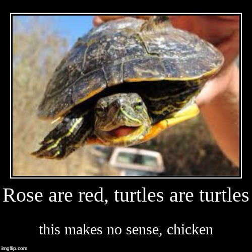 turtles | Rose are red,turtles are turtles | this makes no sense, chicken | image tagged in funny,demotivationals,memes,lol,turtles,doge | made w/ Imgflip demotivational maker