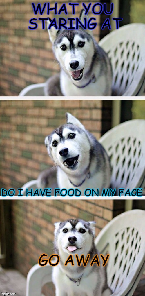 Bad Pun Dog 2 | WHAT YOU STARING AT DO I HAVE FOOD ON MY FACE GO AWAY | image tagged in bad pun dog 2 | made w/ Imgflip meme maker