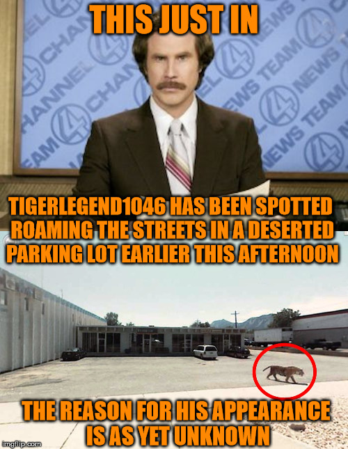 Damn, the news team saw me! Run away! | THIS JUST IN TIGERLEGEND1046 HAS BEEN SPOTTED ROAMING THE STREETS IN A DESERTED PARKING LOT EARLIER THIS AFTERNOON THE REASON FOR HIS APPEAR | image tagged in memes,tigerlegend1046,news,spotted,wild,parking lot | made w/ Imgflip meme maker