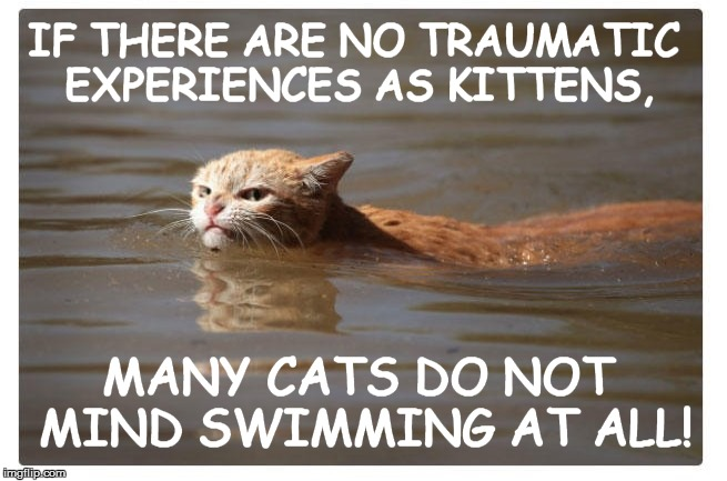 IF THERE ARE NO TRAUMATIC EXPERIENCES AS KITTENS, MANY CATS DO NOT MIND SWIMMING AT ALL! | made w/ Imgflip meme maker