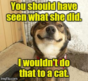 You should have seen what she did. I wouldn't do that to a cat. | made w/ Imgflip meme maker