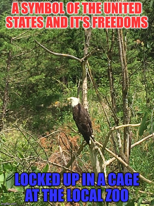 Free the Eagle! | A SYMBOL OF THE UNITED STATES AND IT'S FREEDOMS LOCKED UP IN A CAGE AT THE LOCAL ZOO | image tagged in zoo,eagle,freedom,united states | made w/ Imgflip meme maker