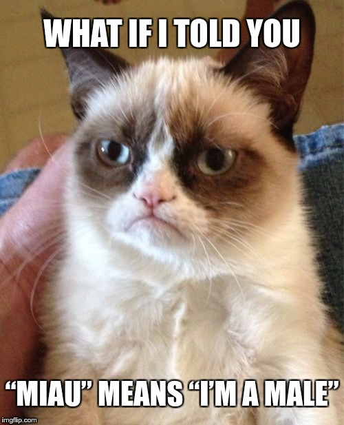 "Grumpy Cat Meme | WHAT IF I TOLD YOU ""MIAU"" MEANS ""I'M A MALE"" 