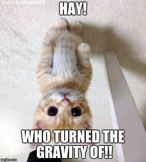 Cute Cat |  HAY! WHO TURNED THE GRAVITY OF!! | image tagged in memes,cute cat | made w/ Imgflip meme maker