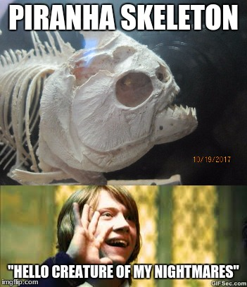 "creepy fish day! | PIRANHA SKELETON ""HELLO CREATURE OF MY NIGHTMARES"" 