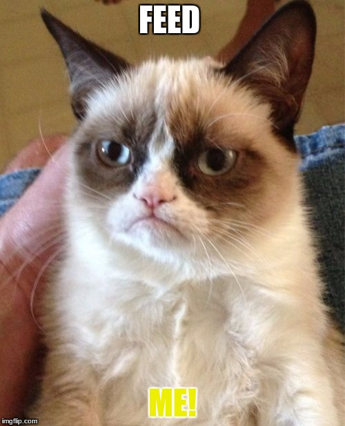 Grumpy Cat Meme | FEED ME! | image tagged in memes,grumpy cat | made w/ Imgflip meme maker
