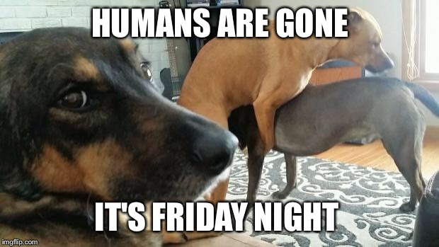 Friday night party  | HUMANS ARE GONE IT'S FRIDAY NIGHT | image tagged in crazy friday night | made w/ Imgflip meme maker