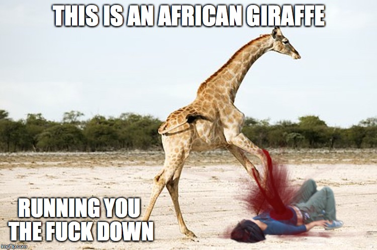 Long Neck Killer | THIS IS AN AFRICAN GIRAFFE RUNNING YOU THE F**K DOWN | image tagged in giraffe,memes | made w/ Imgflip meme maker