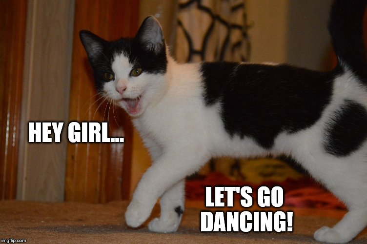 Hey Girl | HEY GIRL... LET'S GO DANCING! | image tagged in cat steppin',funny cat memes,cat meme | made w/ Imgflip meme maker