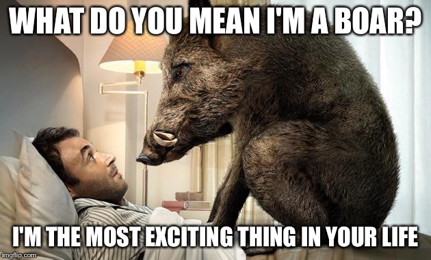 Who are you calling a boar? | WHAT DO YOU MEAN I'M A BOAR? I'M THE MOST EXCITING THING IN YOUR LIFE | image tagged in heavy boar | made w/ Imgflip meme maker