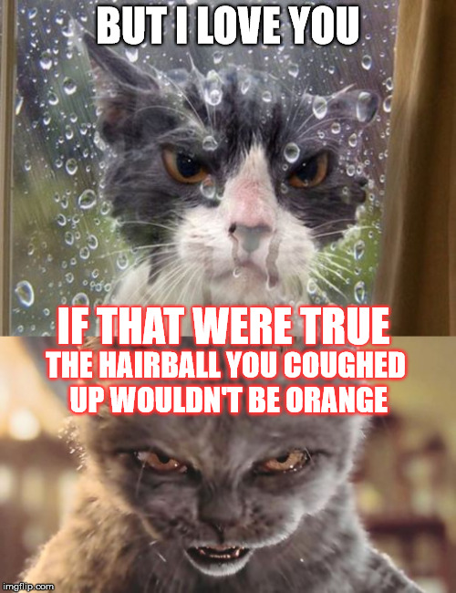 On the next season of Desperate Cat Wives...  |  BUT I LOVE YOU; IF THAT WERE TRUE; THE HAIRBALL YOU COUGHED UP WOULDN'T BE ORANGE | image tagged in cats,memes,cat fight,cheating | made w/ Imgflip meme maker