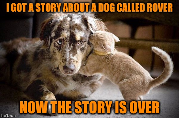 Simple Dog Tale  ≧◠‿●‿◠≦ | I GOT A STORY ABOUT A DOG CALLED ROVER NOW THE STORY IS OVER | image tagged in memes,funny,caturday,dogs,cute,stories | made w/ Imgflip meme maker