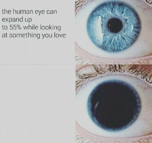1y03j8 eye pupil expand blank template imgflip