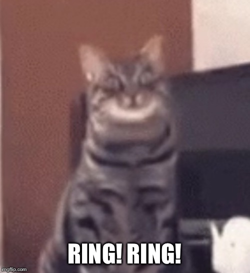 Catnip | RING! RING! | image tagged in catnip | made w/ Imgflip meme maker