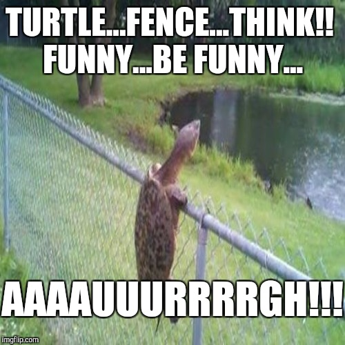 TURTLE...FENCE...THINK!! FUNNY...BE FUNNY... AAAAUUURRRRGH!!! | made w/ Imgflip meme maker