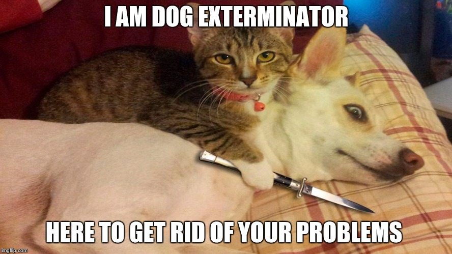 I AM DOG EXTERMINATOR HERE TO GET RID OF YOUR PROBLEMS | image tagged in cats vs dogs | made w/ Imgflip meme maker