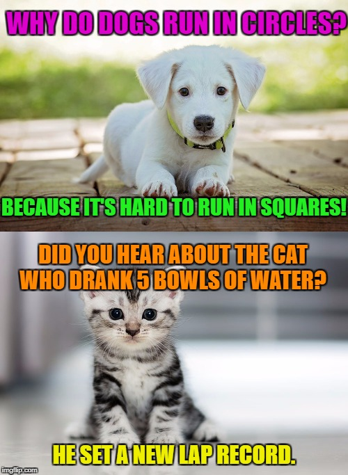 WHY DO DOGS RUN IN CIRCLES? BECAUSE IT'S HARD TO RUN IN SQUARES! DID YOU HEAR ABOUT THE CAT WHO DRANK 5 BOWLS OF WATER? HE SET A NEW LAP REC | made w/ Imgflip meme maker