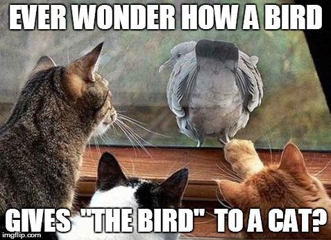 The Bird | EVER WONDER HOW A BIRD GIVES  ''THE BIRD''  TO A CAT? | image tagged in funny | made w/ Imgflip meme maker