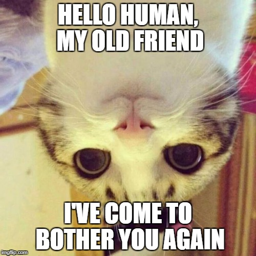 Smiling Cat Meme | HELLO HUMAN, MY OLD FRIEND I'VE COME TO BOTHER YOU AGAIN | image tagged in memes,smiling cat | made w/ Imgflip meme maker