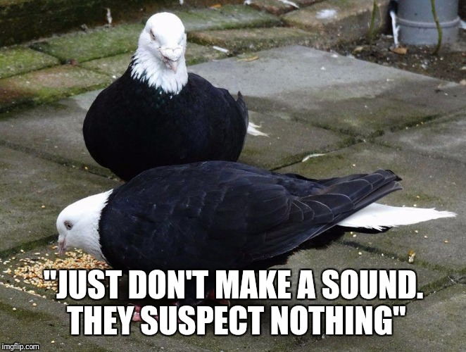 """JUST DON'T MAKE A SOUND. THEY SUSPECT NOTHING"" 