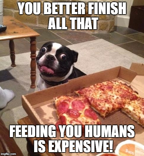 Hungry Pizza Dog | YOU BETTER FINISH ALL THAT FEEDING YOU HUMANS IS EXPENSIVE! | image tagged in hungry pizza dog | made w/ Imgflip meme maker