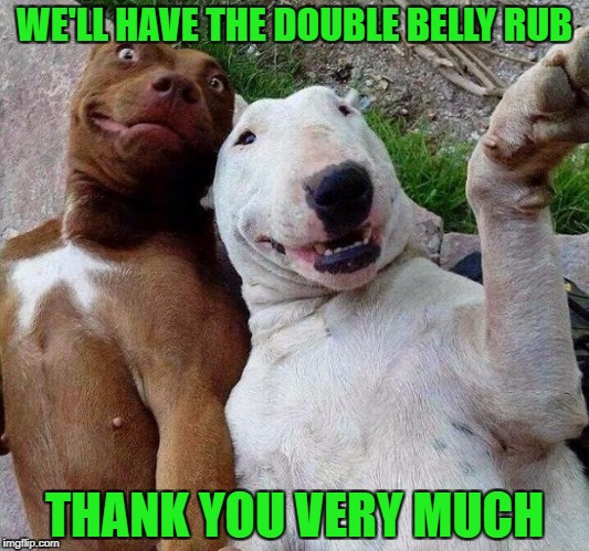 selfie dogs | WE'LL HAVE THE DOUBLE BELLY RUB THANK YOU VERY MUCH | image tagged in selfie dogs | made w/ Imgflip meme maker