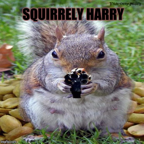 SQUIRRELY HARRY | made w/ Imgflip meme maker