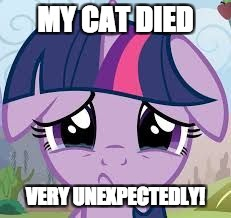 She just wound up dead under the couch! | MY CAT DIED VERY UNEXPECTEDLY! | image tagged in sad twilight,memes,my pet died,sadness | made w/ Imgflip meme maker