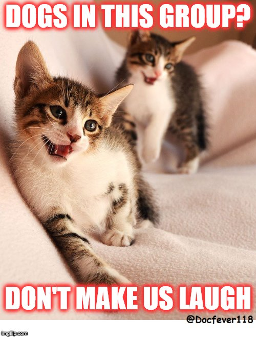 DOGS IN THIS GROUP? DON'T MAKE US LAUGH | image tagged in cats | made w/ Imgflip meme maker