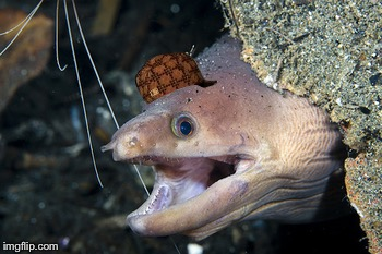Happy Eel | image tagged in happy eel,scumbag | made w/ Imgflip meme maker