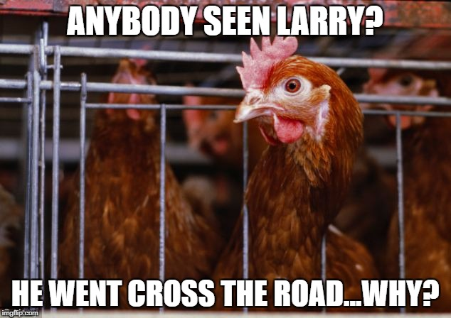 Larry's Missing | ANYBODY SEEN LARRY? HE WENT CROSS THE ROAD...WHY? | image tagged in chicken,chicken jokes | made w/ Imgflip meme maker