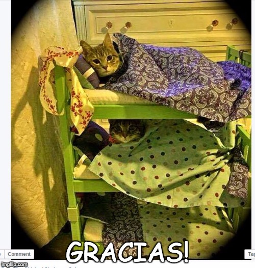 GRACIAS! | image tagged in thank you | made w/ Imgflip meme maker
