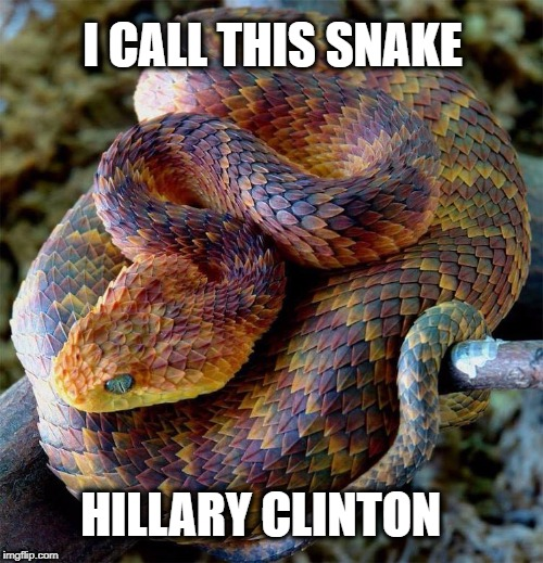 I CALL THIS SNAKE HILLARY CLINTON | made w/ Imgflip meme maker