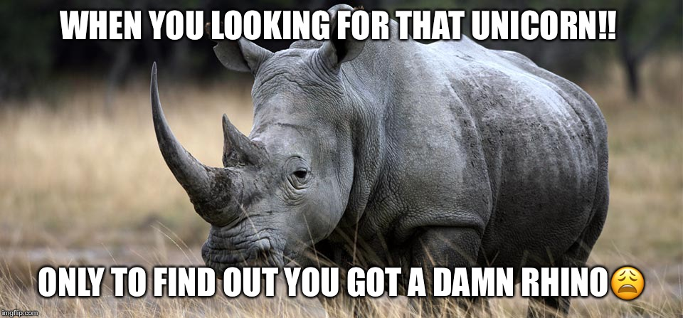 rhino | WHEN YOU LOOKING FOR THAT UNICORN!! ONLY TO FIND OUT YOU GOT A DAMN RHINO | image tagged in rhino | made w/ Imgflip meme maker