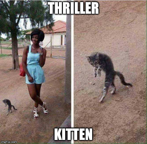 THRILLER KITTEN | made w/ Imgflip meme maker