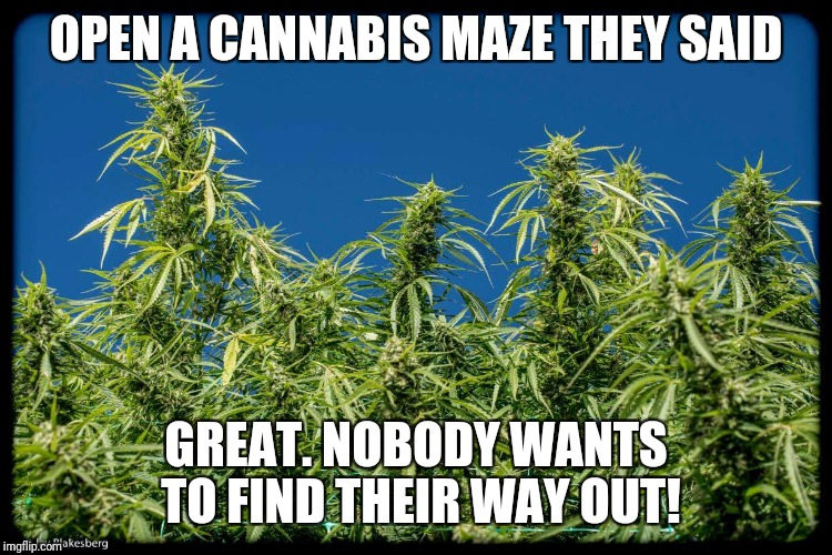 OPEN A CANNABIS MAZE THEY SAID GREAT. NOBODY WANTS TO FIND THEIR WAY OUT! | image tagged in cannabis maze | made w/ Imgflip meme maker