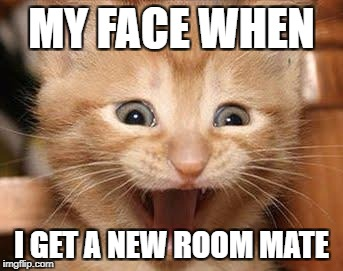 Excited Cat | MY FACE WHEN I GET A NEW ROOM MATE | image tagged in memes,excited cat | made w/ Imgflip meme maker