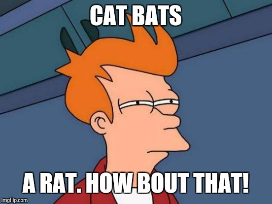 Futurama Fry Meme | CAT BATS A RAT. HOW BOUT THAT! | image tagged in memes,futurama fry | made w/ Imgflip meme maker