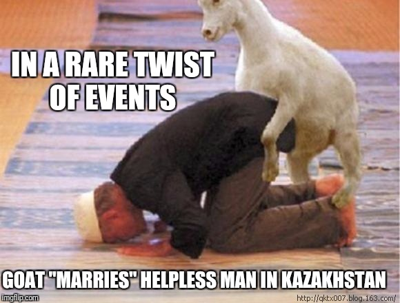 "IN A RARE TWIST OF EVENTS GOAT ""MARRIES"" HELPLESS MAN IN KAZAKHSTAN 