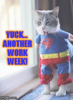 Monday | YUCK... ANOTHER WORK WEEK! | image tagged in memes,cat memes,i hate mondays,yuck,another,work week | made w/ Imgflip meme maker