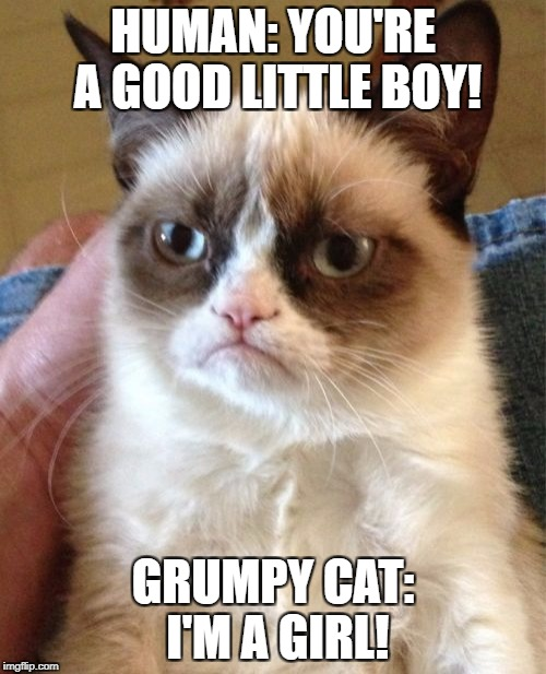 Grumpy Cat Meme | HUMAN: YOU'RE A GOOD LITTLE BOY! GRUMPY CAT: I'M A GIRL! | image tagged in memes,grumpy cat | made w/ Imgflip meme maker