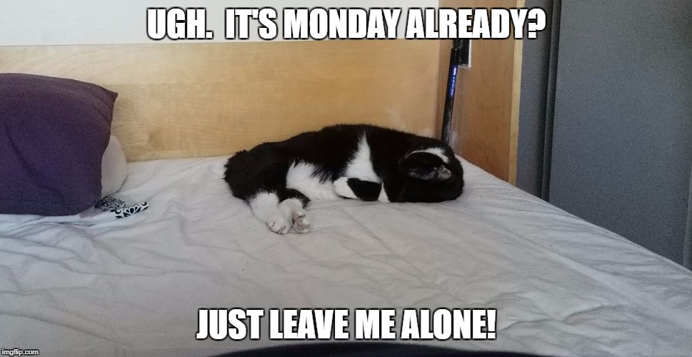 UGH.  IT'S MONDAY ALREADY? JUST LEAVE ME ALONE! | image tagged in monday madness | made w/ Imgflip meme maker