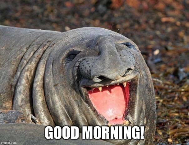 Good morning | GOOD MORNING! | image tagged in good morning | made w/ Imgflip meme maker