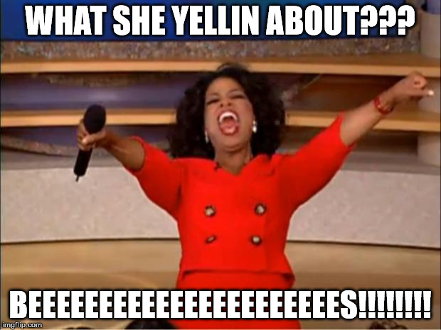 Oprah You Get A Meme | WHAT SHE YELLIN ABOUT??? BEEEEEEEEEEEEEEEEEEEEEES!!!!!!!! | image tagged in memes,oprah you get a | made w/ Imgflip meme maker