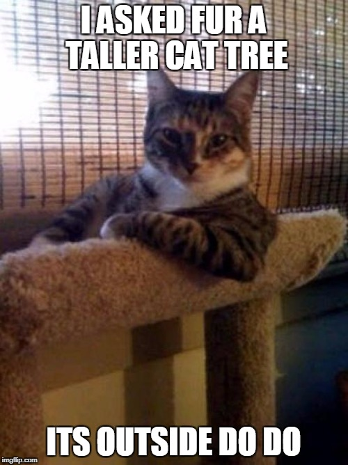 The Most Interesting Cat In The World Meme | I ASKED FUR A TALLER CAT TREE ITS OUTSIDE DO DO | image tagged in memes,the most interesting cat in the world | made w/ Imgflip meme maker
