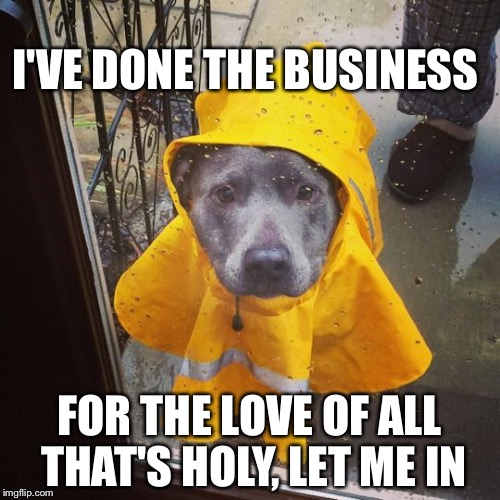 Wet dog | I'VE DONE THE BUSINESS FOR THE LOVE OF ALL THAT'S HOLY, LET ME IN | image tagged in dog,rain | made w/ Imgflip meme maker