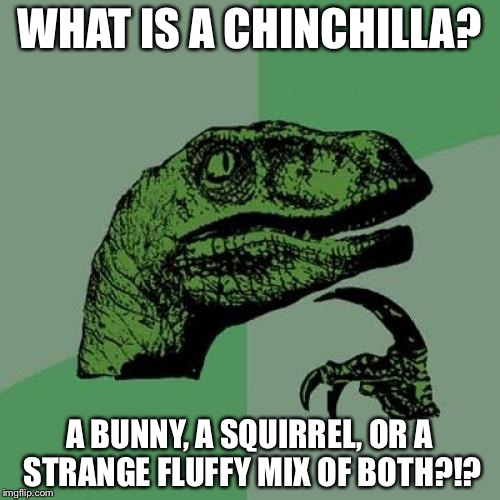 Philosoraptor Meme | WHAT IS A CHINCHILLA? A BUNNY, A SQUIRREL, OR A STRANGE FLUFFY MIX OF BOTH?!? | image tagged in memes,philosoraptor | made w/ Imgflip meme maker