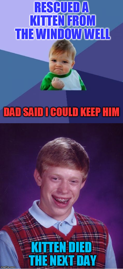 This really happened to my son (8).  We named him Zipper.  I buried him in the back yard and My son carved him a wood marker | RESCUED A KITTEN FROM THE WINDOW WELL KITTEN DIED THE NEXT DAY DAD SAID I COULD KEEP HIM | image tagged in meme,bad luck brian,success kid,zipper,kids,cute kittens | made w/ Imgflip meme maker