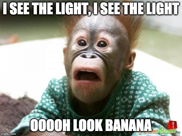 IS IT REALLY MONDAY? | I SEE THE LIGHT, I SEE THE LIGHT OOOOH LOOK BANANA | image tagged in is it really monday | made w/ Imgflip meme maker